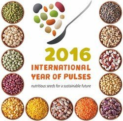 Cooking with Pulses: Easy, Cheap, Nutritious & Delicious!