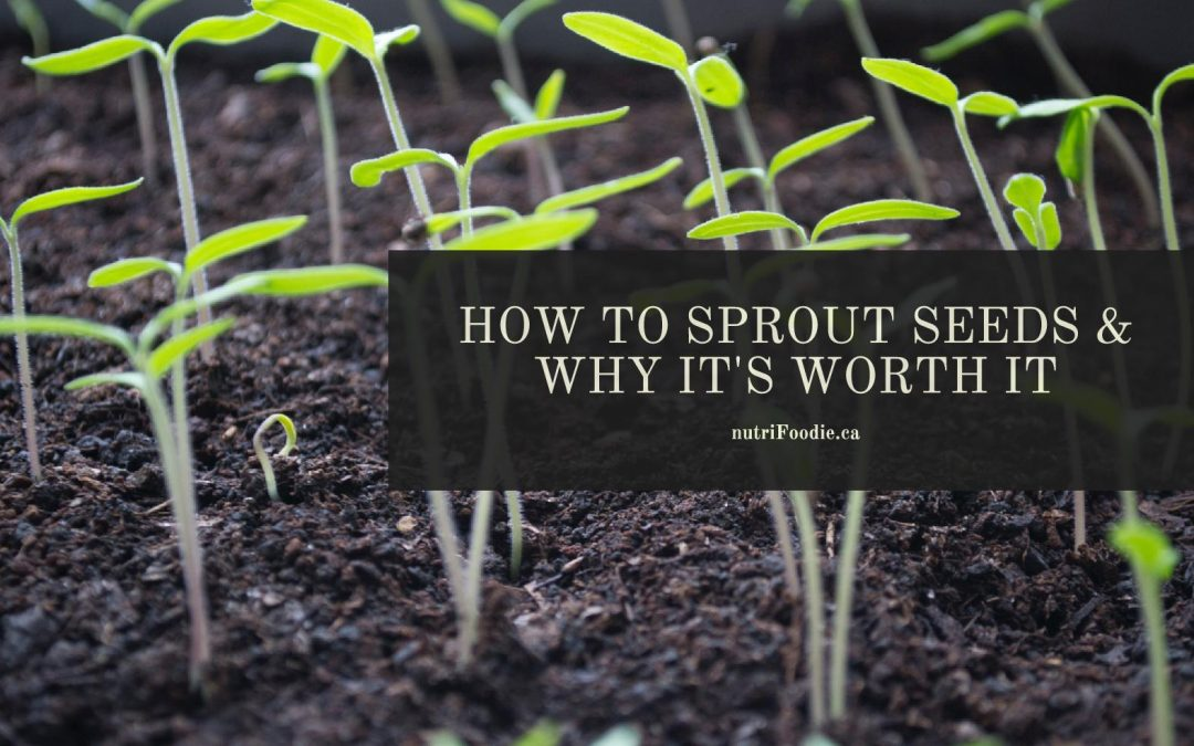 How To Sprout Seeds (& Why it's Worth It!)